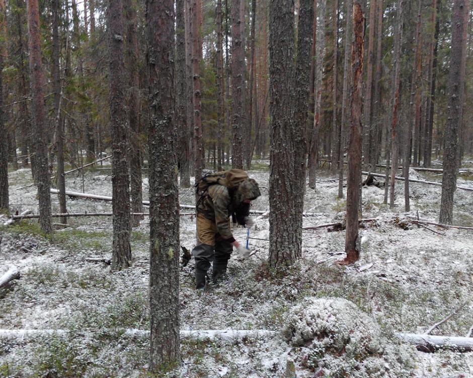 Проведение лесопатологического обследования лесных насаждений