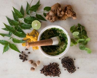 Геоинформационная система «Лекарственные растения»