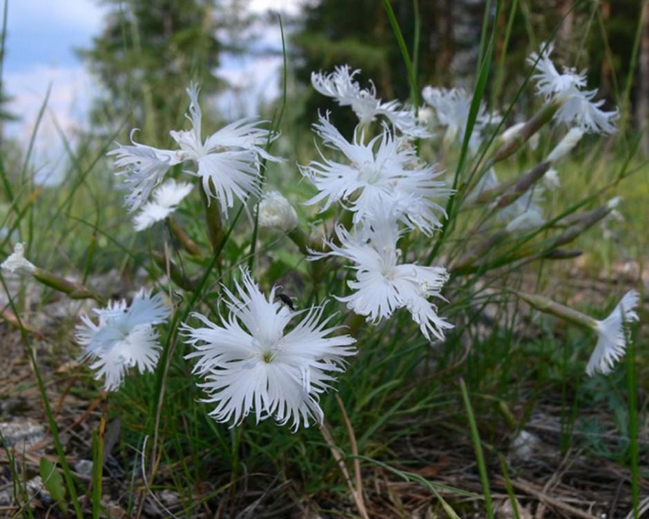 Геоинформационная система «Редкие и исчезающие виды растений Пермского края»