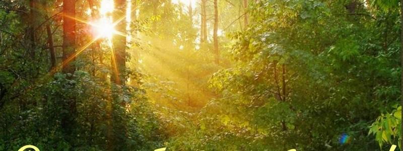 Поздравляем с Днем работников леса!