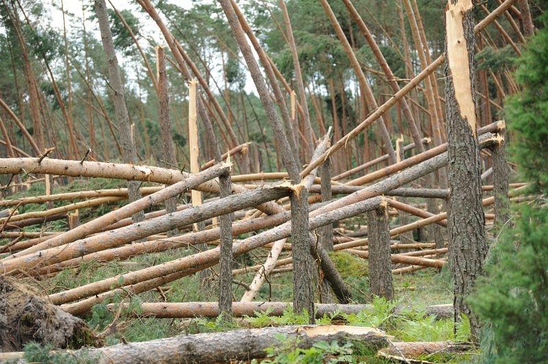 Крупные пожары и ветровалы в лесах Республики Коми