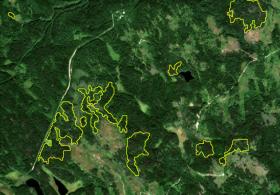 Оперативное картографирование нарушений лесного покрова на основе спутниковых данных с высоким пространственно-временным разрешением