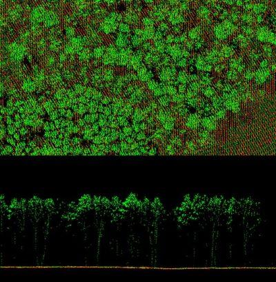 Программа ForestCalc – программа для пересчета показателей таксационных характеристик, рассчитанных по данным технологии воздушно-лазерного сканирования к виду, который используется в лесном хозяйстве Российской Федерации